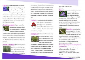 Буклет Мифы и растения -2