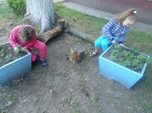 Девочки помогают сажать цветы на улице