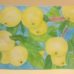 1-Туленинова Алена, Антоновские яблоки