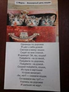 кошки (2)